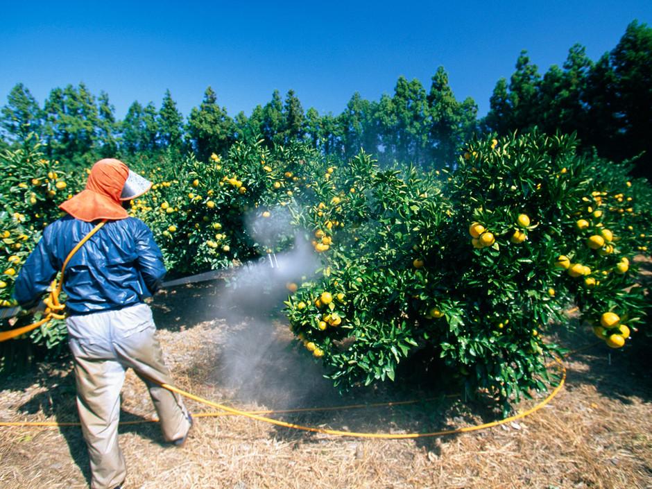 http://www.apophtegme.com/COUPS%20DE%20GUEULE/images/pesticides.jpg